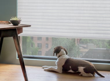 dog looking out condo window with cellular roller shades rolled up in West University TX