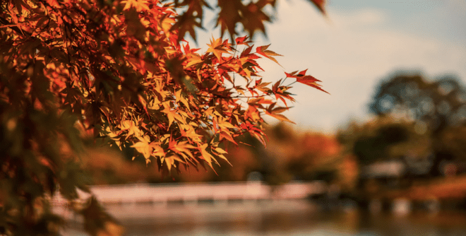 Fall foliage during the changing season in Houston, Texas.