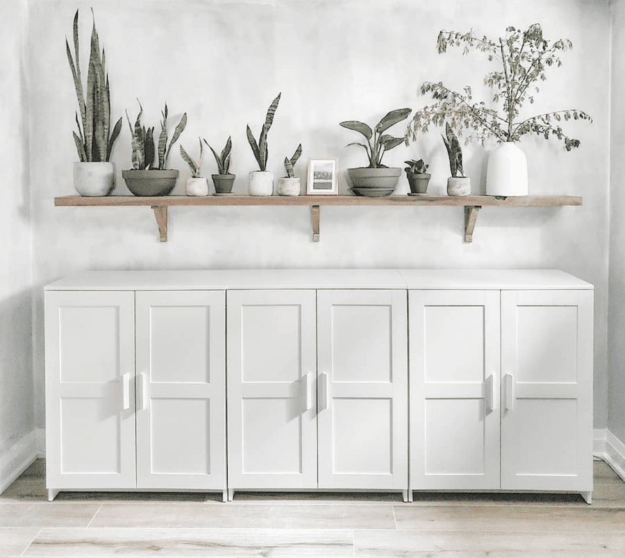 cement wall with nature-inspired plant shelf