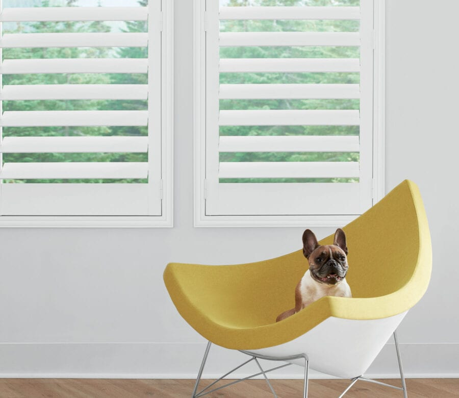 newstyle shutters in modern home with small dog in houston texas