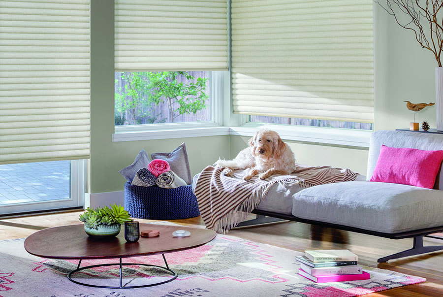 pet sits in sunny spot with custom cellular roller shades in Houston TX