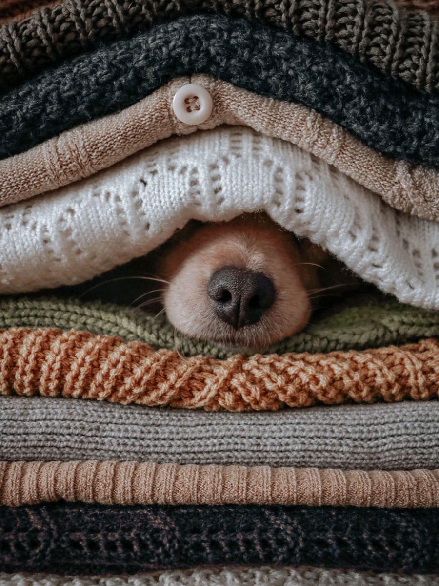 dog nose under blanket houston TX