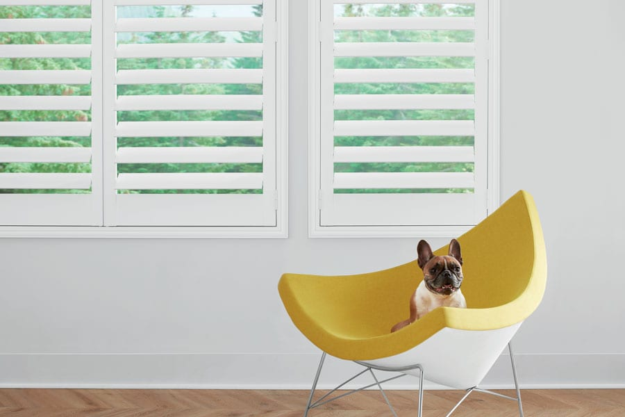 white shutters with dog in chair in Memorial TX